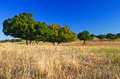 Autumn grassland Royalty Free Stock Photography