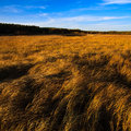 The autumn grassland Royalty Free Stock Photo