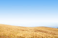 Autumn grassland with dry brown grasses and blue sky Royalty Free Stock Photo