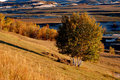 Autumn grassland in morning Royalty Free Stock Photo