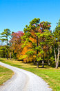 Autumn Gravel Road Royalty Free Stock Photo