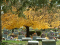 Autumn graveyard the in with colorful foliage Royalty Free Stock Photo