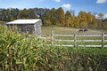 Autumn graze horses the in sun near voorheesville new york Royalty Free Stock Photography