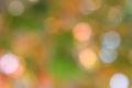 Autumn green background foto di riserva della sfuocatura Immagine Stock Libera da Diritti