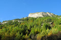 Autumn green and yellow trees in the mountains Royalty Free Stock Photo