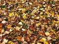 Autumn ground Stock Photography
