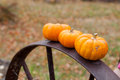 Autumn halloween pumpkins Royalty Free Stock Photo