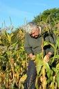 Otoño cosecha maíz