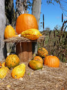 Autumn harvest arrangement Stock Photography