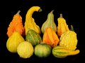 Autumn harvest gourds group of Stock Photo