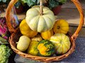 Autumn Harvest and Holiday still life. Happy Thanksgiving. Selection of various pumpkins on dark wooden background Royalty Free Stock Photo