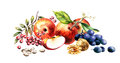 Autumn harvest and leaves. Watercolor illustration Royalty Free Stock Photo
