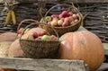 Autumn Harvest. Pumpkin And Ap...