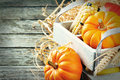 Autumn harvest setting with pumpkins and corn Royalty Free Stock Images