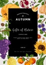 Autumn harvest. Royalty Free Stock Photo