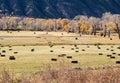 Autumn hay bales Royalty Free Stock Photo