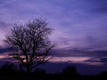 Autumn is here with purple sky everything better Royalty Free Stock Photo