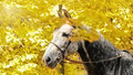 Autumn horse portrait Stock Image