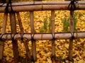 Autumn Japanese fence Royalty Free Stock Photo