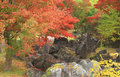 Autumn Japanese garden Stock Image
