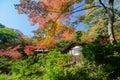Autumn japanese garden com bordo Fotografia de Stock Royalty Free
