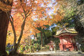 Autumn japanese garden with maple in kyoto japan Royalty Free Stock Image