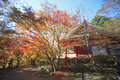 Autumn japanese garden with maple in kyoto japan Royalty Free Stock Photo