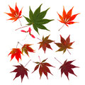 Autumn Japanese maple leaves fall cut outs Royalty Free Stock Photo