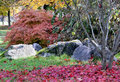 Autumn with japanese maple tree Royalty Free Stock Photo