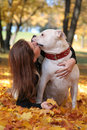 Autumn kiss cute woman walking with dog Royalty Free Stock Photo
