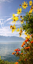 Autumn on lake Geneva - Switzerland Royalty Free Stock Images