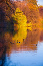Autumn lake waterscape with ducks beautiful trees and Stock Photography