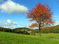 Autumn landscape. Royalty Free Stock Photos