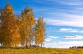 Autumn landscape with birch trees Royalty Free Stock Photography