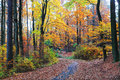 Autumn landscape in bohemian paradise czech republic colorful Stock Photography