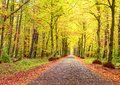 Autumn landscape, brick road between trees, fallen leaves Royalty Free Stock Photo