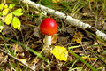 Autumn landscape,  charming mushroom  Royalty Free Stock Image