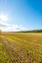 Autumn landscape. Colorful sunny day. Green fields and yellow trees. Royalty Free Stock Photo