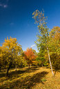 Autumn landscape with colorful trees Royalty Free Stock Image