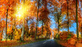 Autumn landscape with country road in orange tone. Nature backgr Royalty Free Stock Photo