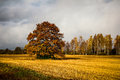 Autumn landscape with golden field bright color trees and rainy clouded sky contrast between warm an cool colors Stock Photography