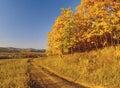 Autumn landscape with an oak grove Stock Photos