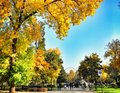 Autumn landscape in the park area. Royalty Free Stock Photo
