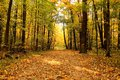 Autumn landscape. Park in the fall. Golden autumn. Royalty Free Stock Photo