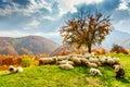 Autumn Landscape In The Romani...