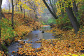 Autumn landscape stream in the forest Royalty Free Stock Image