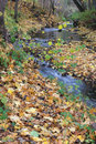 Autumn landscape stream in the forest Royalty Free Stock Photography