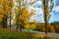 Autumn landscape. Trees along the road and forest with blue sky Royalty Free Stock Photo