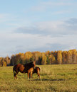 Autumn landscape with two horses on a meadow Stock Photo
