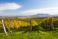 Autumn landscape with vineyard in colors and blue sky czech republic moravia europe Royalty Free Stock Image